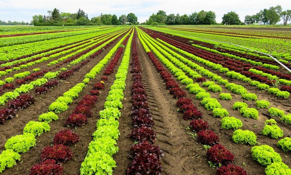 Industria agricola, artigiana & Industria BIO